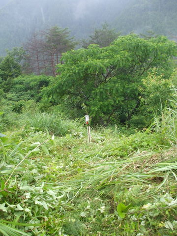去年秋、ふたりで参加された立命館の古松君・下村君が植えた苗(紅華)、無事です。よかった・・・
